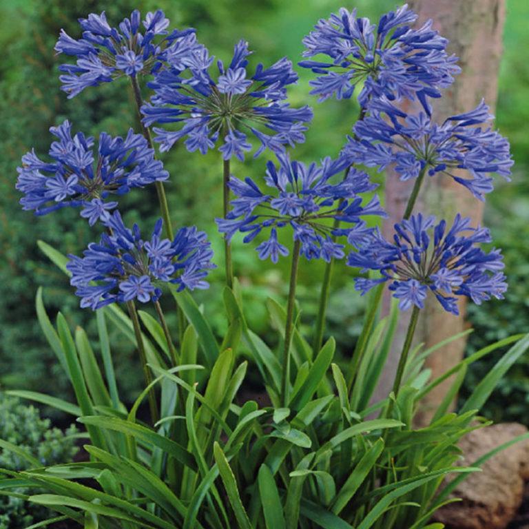 espace fleurs plante toulon la garde