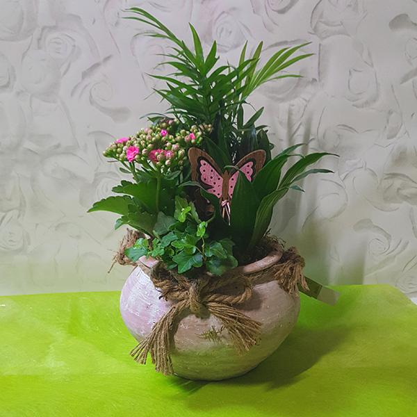 plante espace fleurs la garde