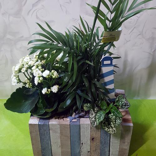 Plantes espace fleurs la garde