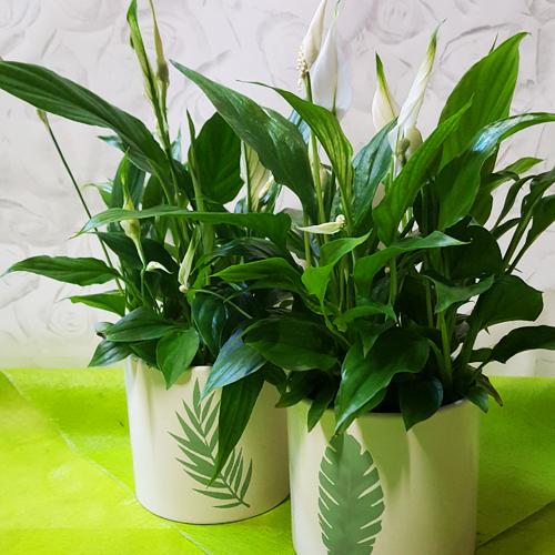 espace fleurs la garde plantes