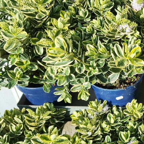 ESPACE FLEURS LA GARDE, plantes
